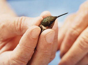 hummingbird_in_hand